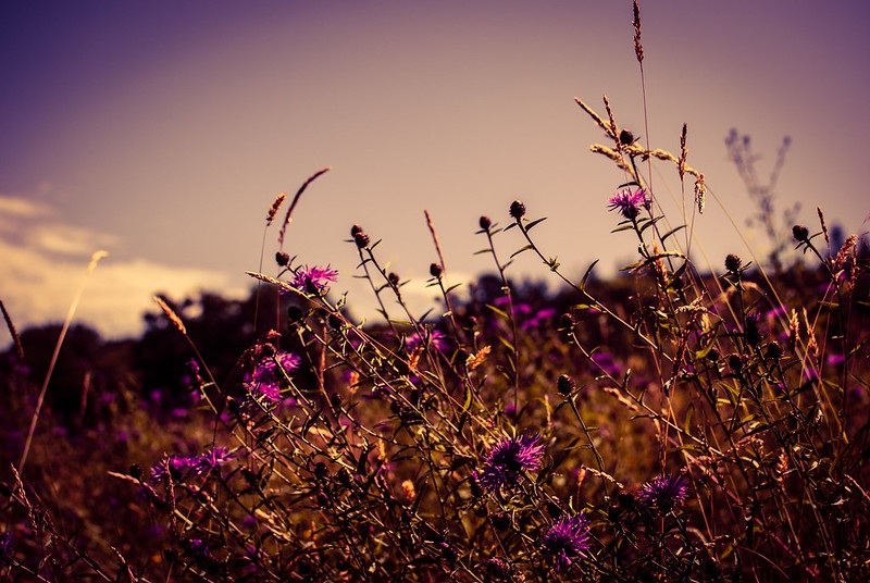 Cornucopia. Wildflowers in a field.