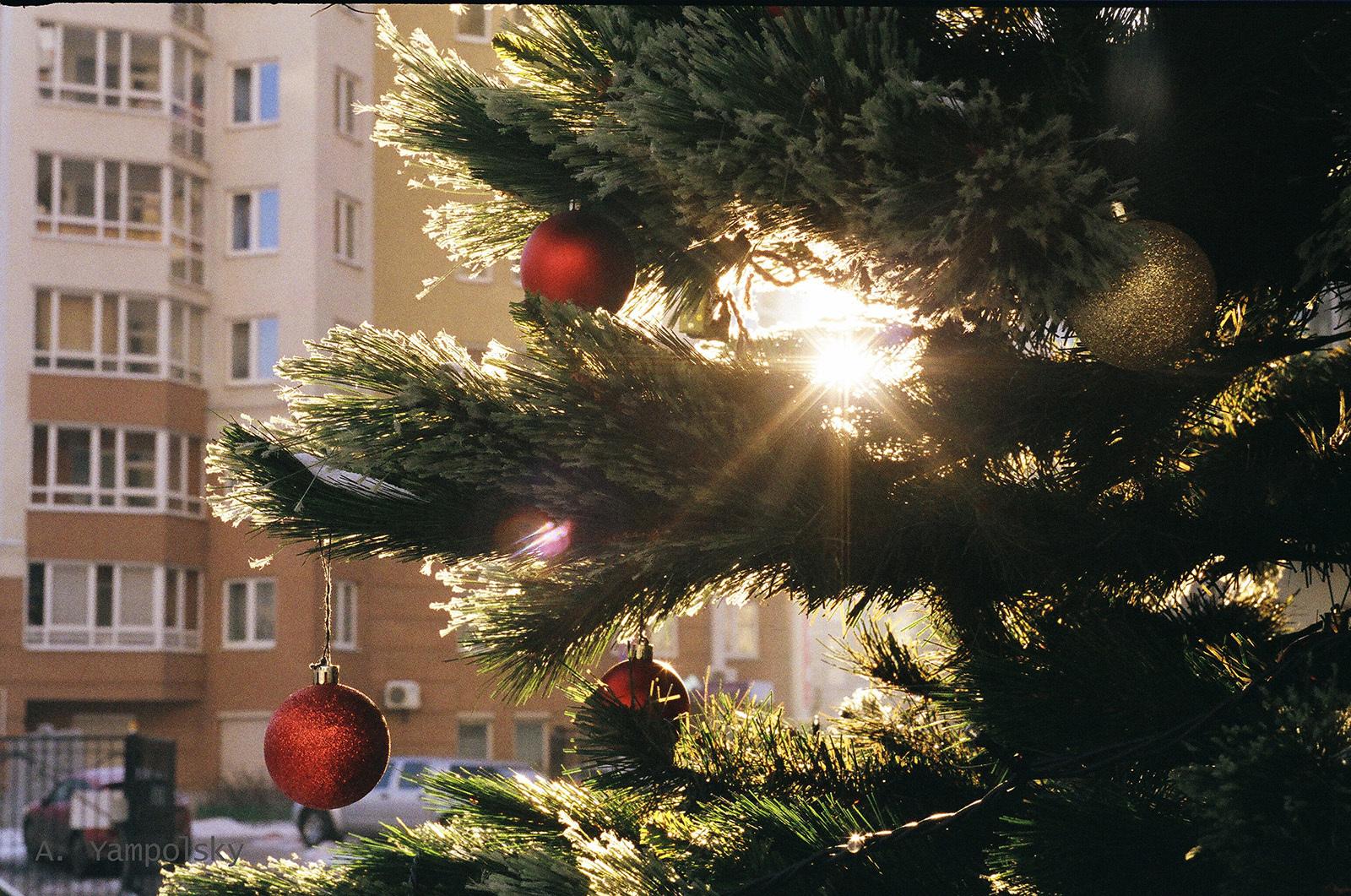 New Year's tree at sunset(Ёлка на закате )